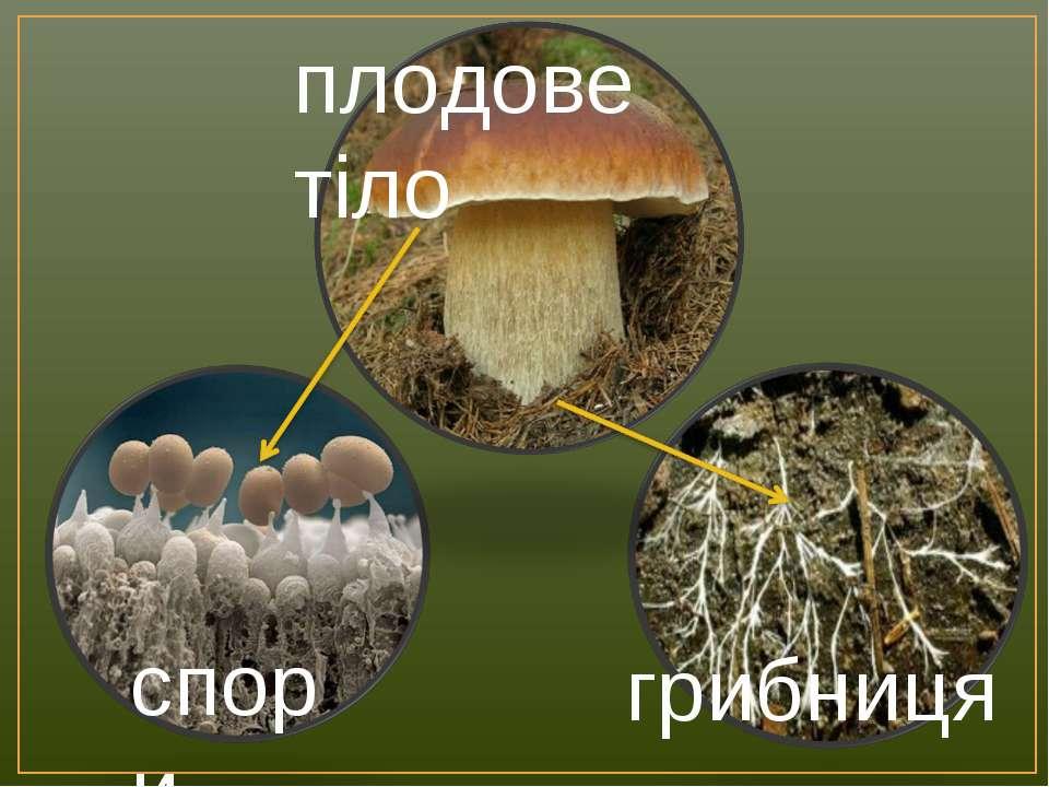 спори грибниця плодове тіло