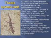 Єдиний середземноморський гекон у фауні України. Поширений на Кримському п-ві...