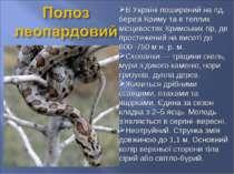 В Україні поширений на пд. березі Криму та в теплих місцевостях Кримських гір...