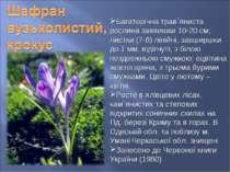 Багаторічна трав`яниста рослина заввишки 10-20 см; листки (7-8) лінійні, завш...