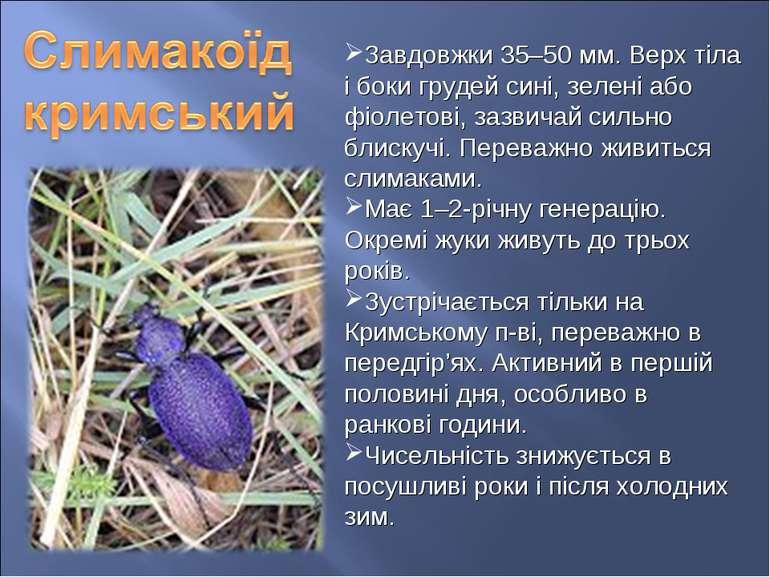 Завдовжки 35–50 мм. Верх тіла і боки грудей сині, зелені або фіолетові, зазви...