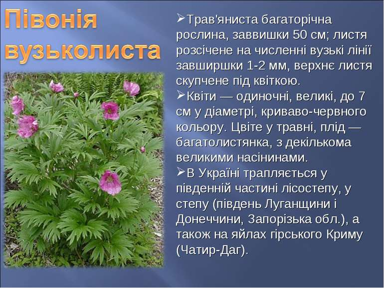 Трав'яниста багаторічна рослина, заввишки 50 см; листя розсічене на численні ...