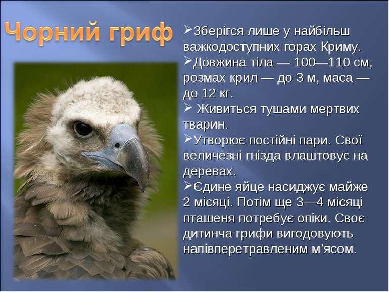 Зберігся лише у найбільш важкодоступних горах Криму. Довжина тіла — 100—110 с...