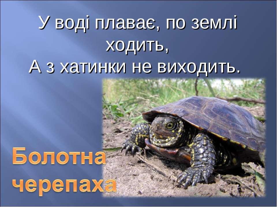 У воді плаває, по землі ходить, А з хатинки не виходить.