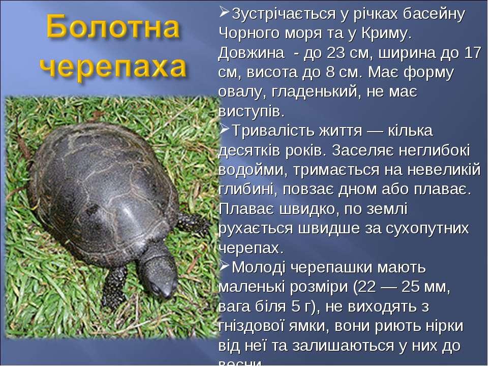 Зустрічається у річках басейну Чорного моря та у Криму. Довжина - до 23 см, ш...