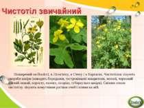 Чистотіл звичайний Поширений на Поліссі, в Лісостепу, в Степу і в Карпатах. Ч...