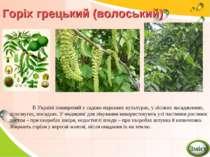 Горіх грецький (волоський) В Україні поширений у садово-паркових культурах, у...