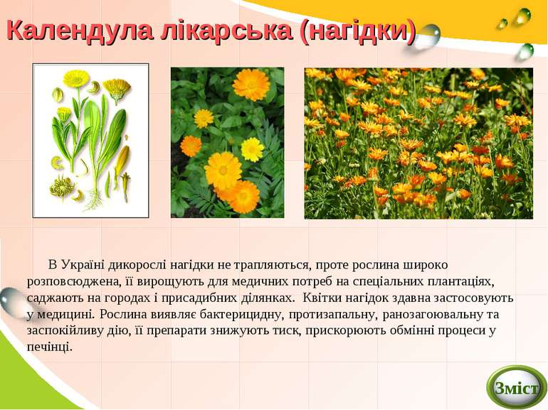 заняття для гуртка лікарські рослини