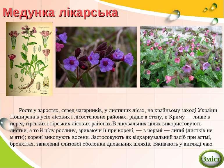 Медунка лікарська Росте у заростях, серед чагарників, у листяних лісах, на кр...
