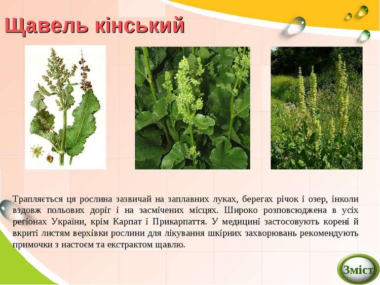 Щавель кінський Трапляється ця рослина зазвичай на заплавних луках, берегах р...