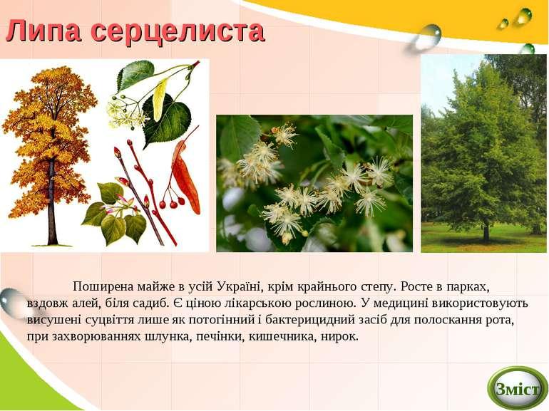 Липа серцелиста Поширена майже в усій Україні, крім крайнього степу. Росте в ...