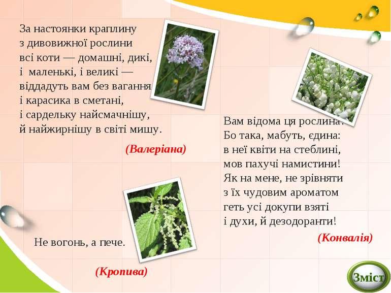 За настоянки краплину з дивовижної рослини всі коти — домашні, дикі, і малень...
