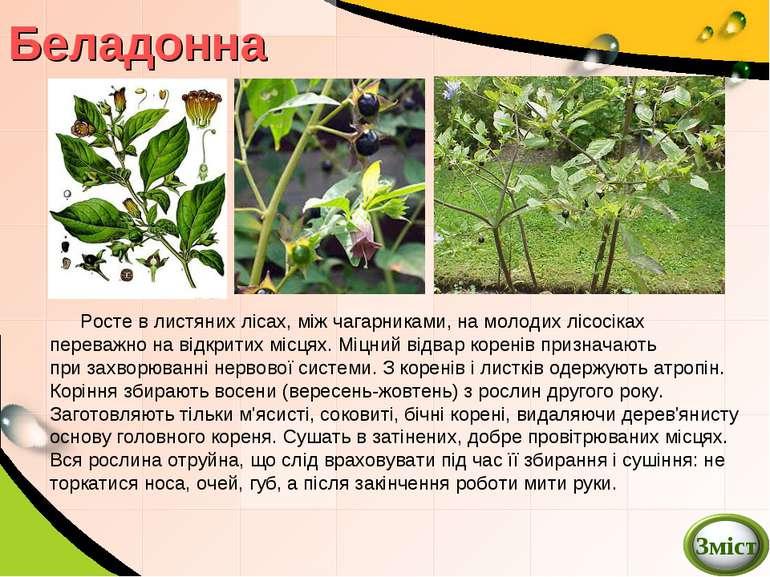 Беладонна Росте в листянихлісах, міжчагарниками, на молодих лісосіках перев...