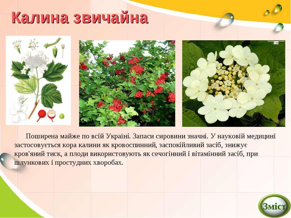 Калина звичайна Поширена майже по всій Україні. Запаси сировини значні. У нау...