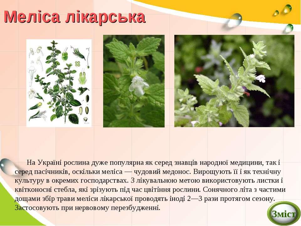 На Україні рослина дуже популярна як серед знавців народної медицини, так і с...