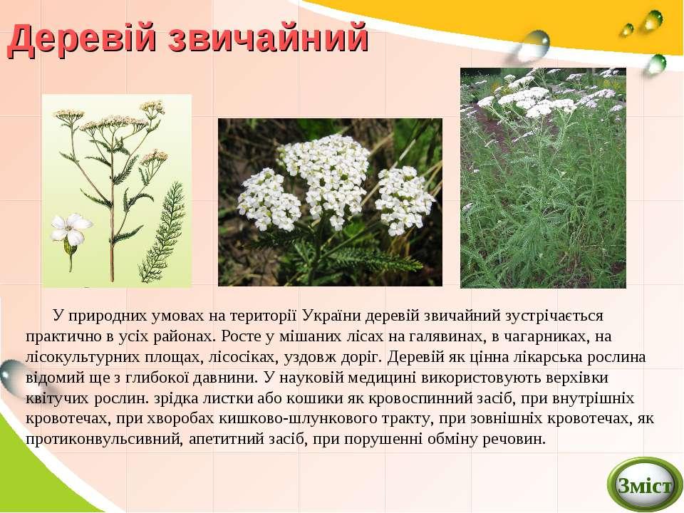 У природних умовах на території України деревій звичайний зустрічається практ...