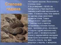 В Україні заселяє Лісостепову і Степову зони. За розмірами – 60-65 см. Забарв...