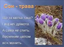 Що за квітка така? І від неї дрімота. А сама не спить, Весняним цвітом всіх м...