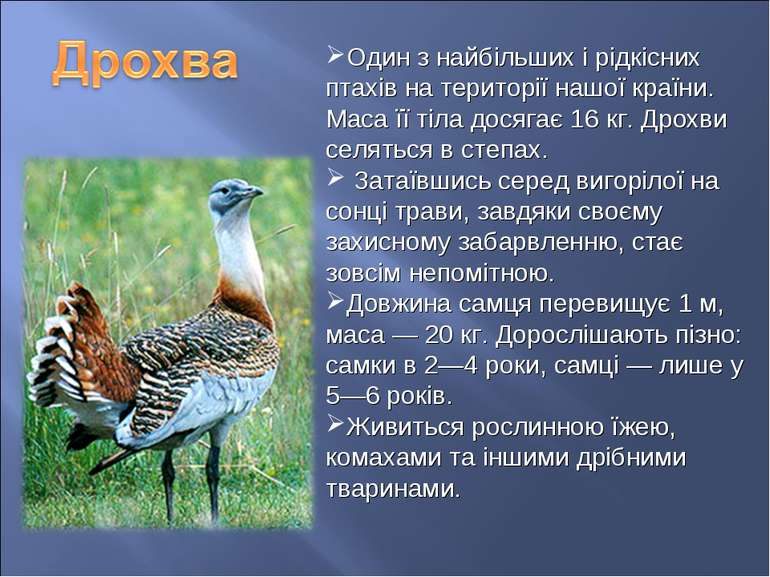 Один з найбільших і рідкісних птахів на території нашої країни. Маса її тіла ...