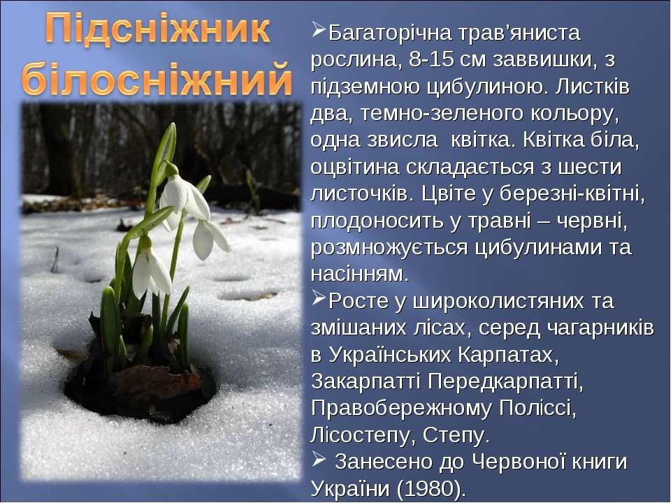 Багаторічна трав'яниста рослина, 8-15 см заввишки, з підземною цибулиною. Лис...