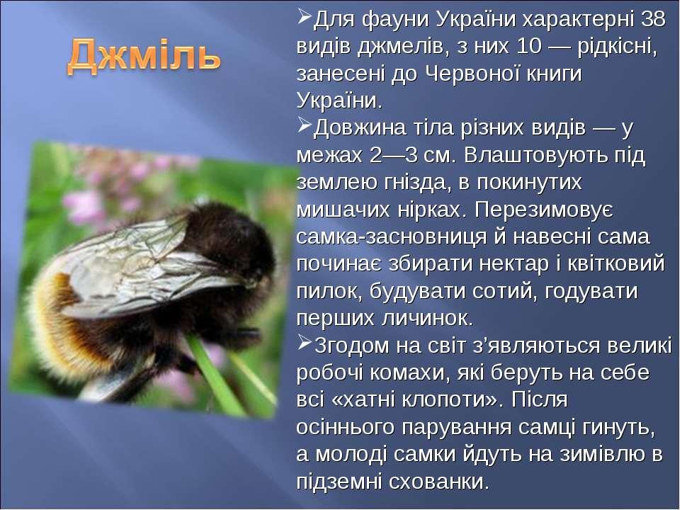 Для фауни України характерні 38 видів джмелів, з них 10 — рідкісні, занесені ...