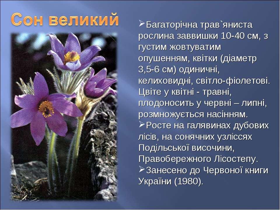 Багаторічна трав`яниста рослина заввишки 10-40 см, з густим жовтуватим опушен...