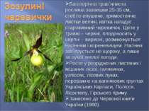 Багаторічна трав`яниста рослина заввишки 25-35 см, стебло опушене, прямостояч...