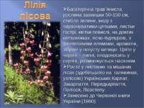 Багаторічна трав`яниста рослина заввишки 50-150 см, стебло зелене, іноді з че...
