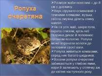 Розміри жаби невеликі – до 8 см у довжину. Верх сірувато-оливковий з темними ...