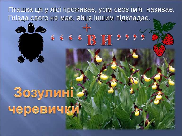 Пташка ця у лісі проживає, усім своє ім'я називає. Гнізда свого не має, яйця ...