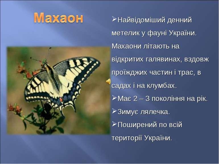 Найвідоміший денний метелик у фауні України. Махаони літають на відкритих гал...
