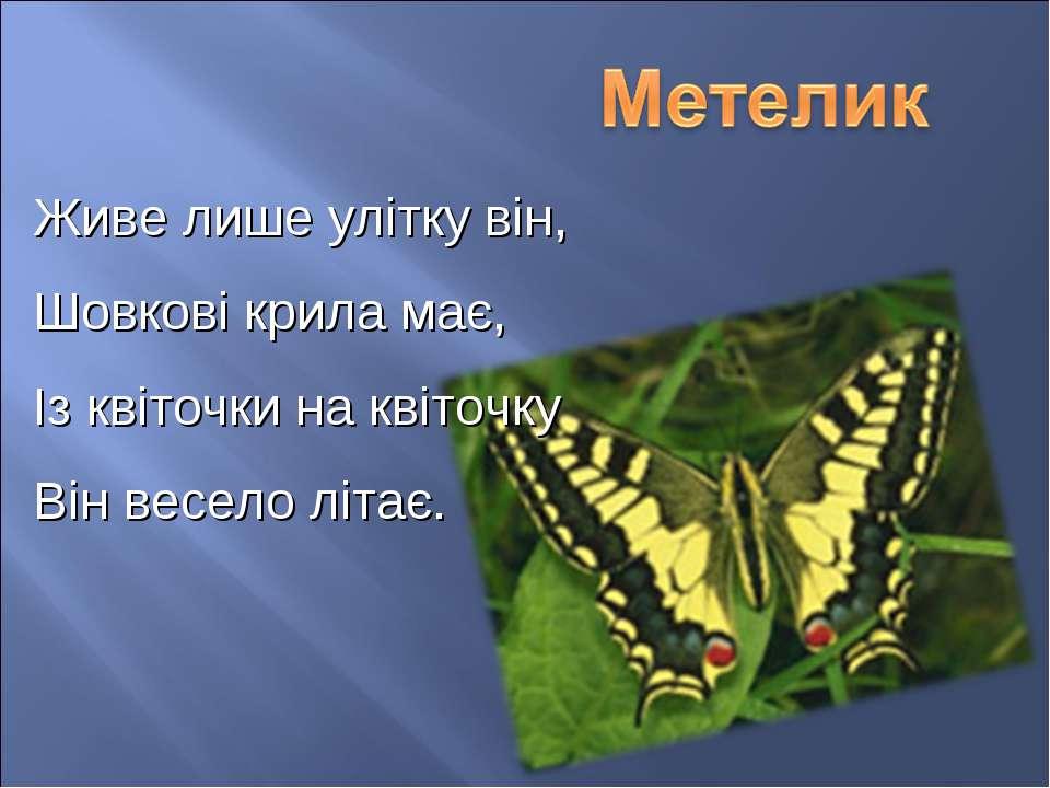 Живе лише улітку він, Шовкові крила має, Із квіточки на квіточку Він весело л...