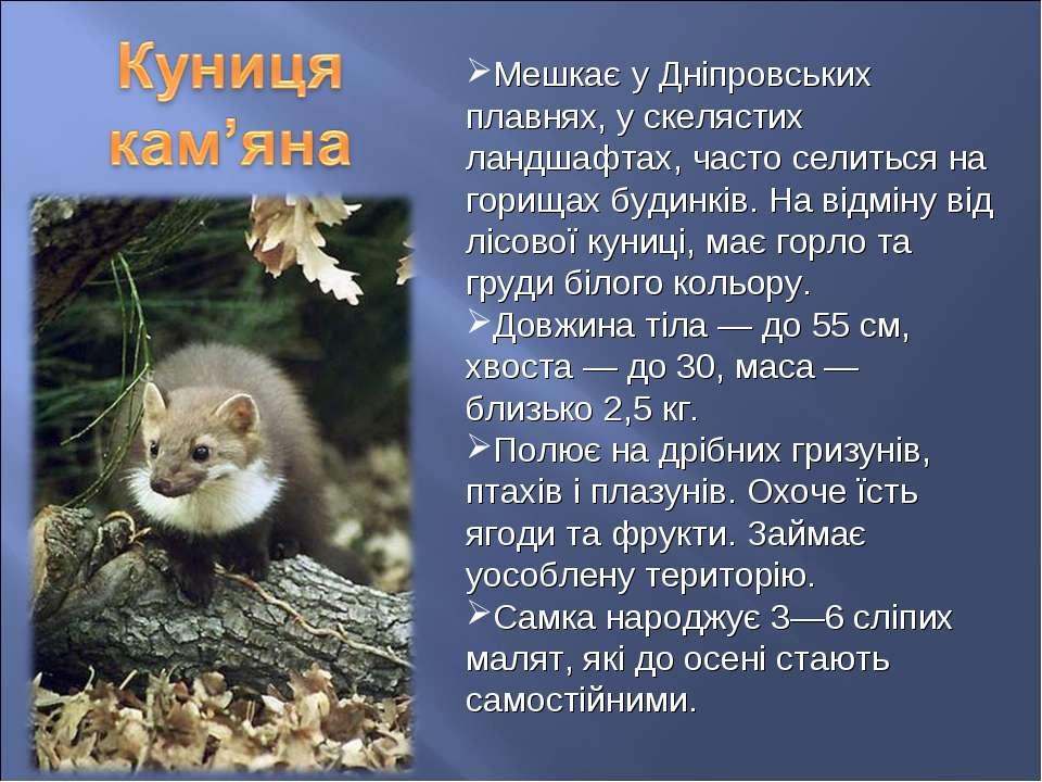 Мешкає у Дніпровських плавнях, у скелястих ландшафтах, часто селиться на гори...
