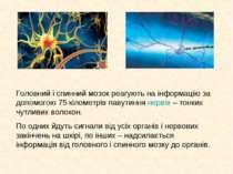 Головний і спинний мозок реагують на інформацію за допомогою 75 кілометрів па...