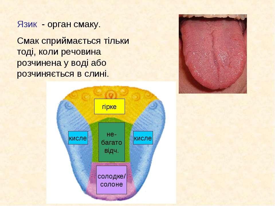 Язик - орган смаку. Смак сприймається тільки тоді, коли речовина розчинена у ...