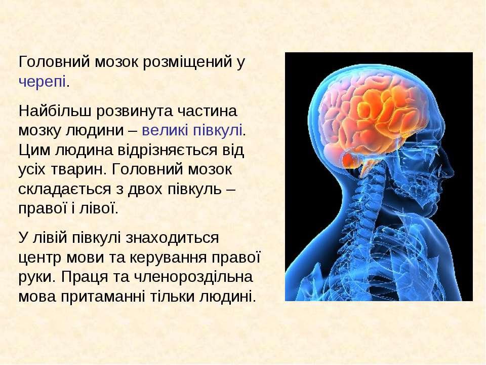 Головний мозок розміщений у черепі. Найбільш розвинута частина мозку людини –...