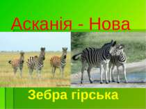 Асканія - Нова Зебра гірська