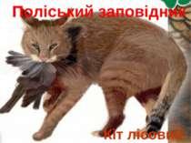 Кіт лісовий Поліський заповідник