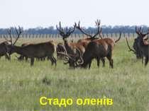 Стадо оленів