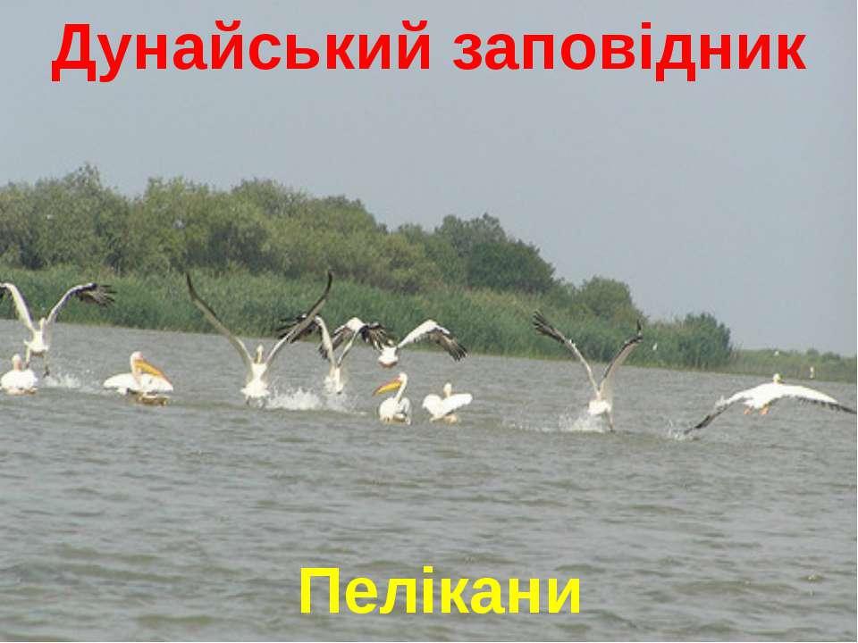 Дунайський заповідник Пелікани