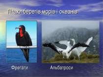 Птахи берегів морів і океанів Фрегати Альбатроси