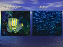 Смугаста риба Сайра