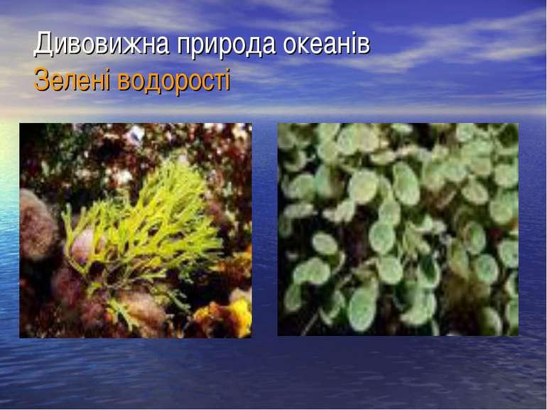 Дивовижна природа океанів Зелені водорості