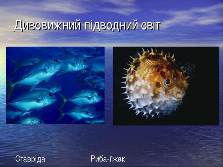Дивовижний підводний світ Ставрiда Риба-їжак