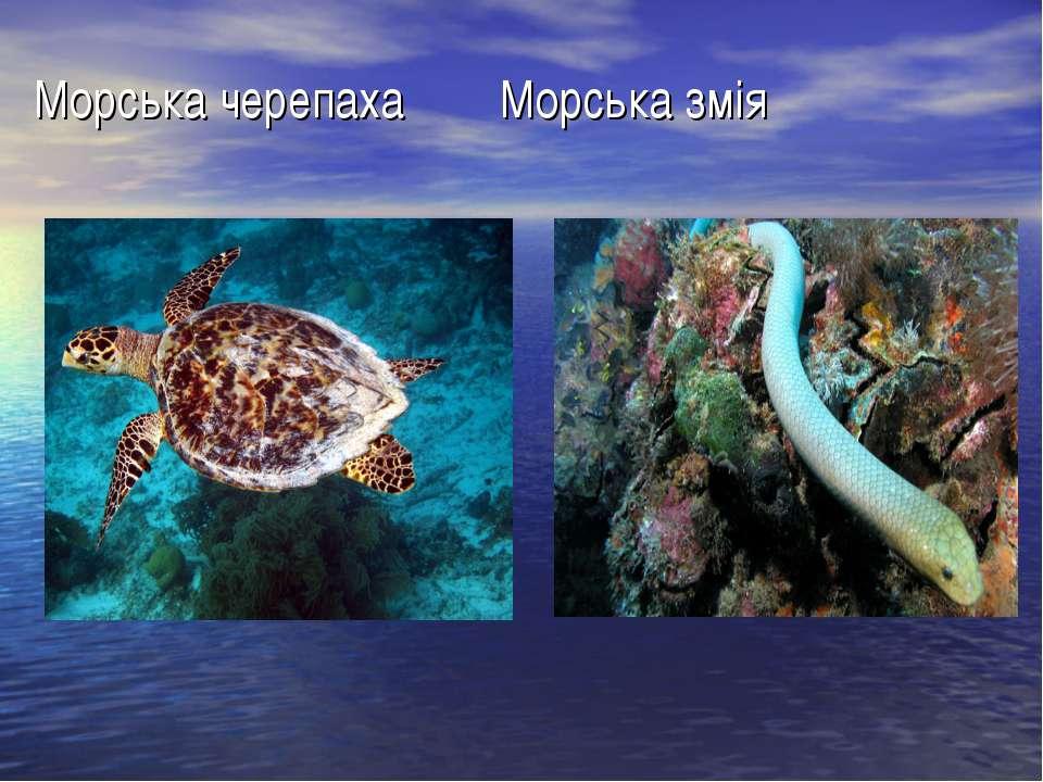 Морська черепаха Морська змія