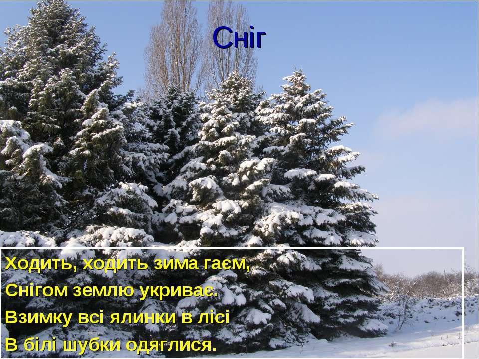 Сніг Ходить, ходить зима гаєм, Снігом землю укриває. Взимку всі ялинки в лісі...