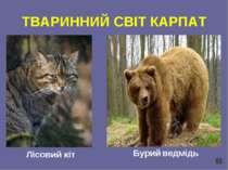 ТВАРИННИЙ СВІТ КАРПАТ Лісовий кіт Бурий ведмідь