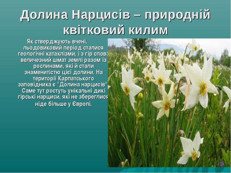Долина Нарцисів – природній квітковий килим Як стверджують вчені, льодовикови...