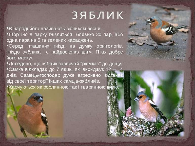 В народі його називають вісником весни. Щорічно в парку гніздиться близько 30...