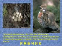 Р Я Б Ч И К Типовий мешканець лісу, він має виняткову маневреність польоту в ...